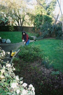 A Board member of the PCDA, gardening in the backyard of the Menno Simons Centre